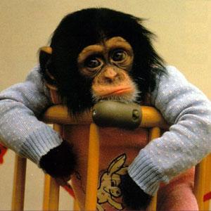 monkey_tired2