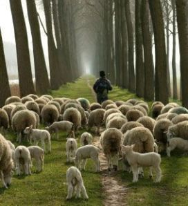 http://lorimoon.files.wordpress.com/2009/03/sheep-with-shepherd.jpg